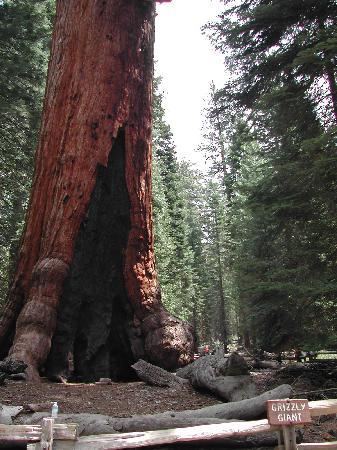 Mariposa Grove of Giant Sequoias: Mariposa