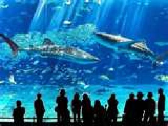 Cabrillo Marine Aquarium Mirando Los Tiburones