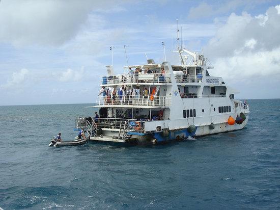 Cairns Dive Centre: Diving-lower deck, laundry-middle deck.