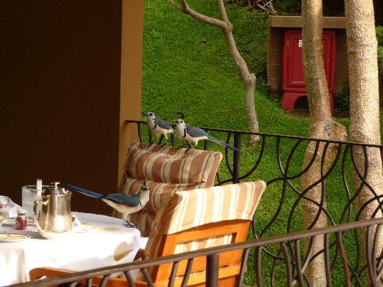 Four Seasons Resort Costa Rica at Peninsula Papagayo: birds