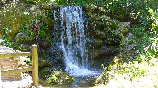 Dunnellon, ฟลอริด้า: Rainbow Springs Fall