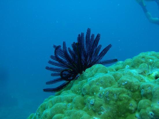 Blue Dive Port Douglas : so nice ...