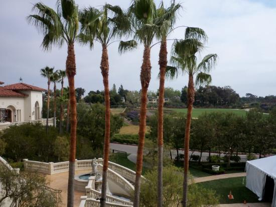 Dana Point, CA: Just some nice trees outside the hotel.