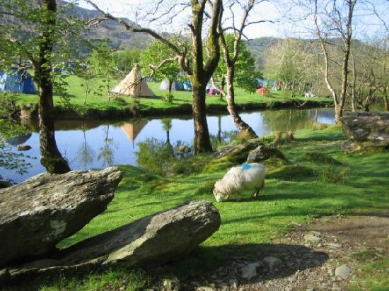 Nant Gwynant, UK: Riverside camping