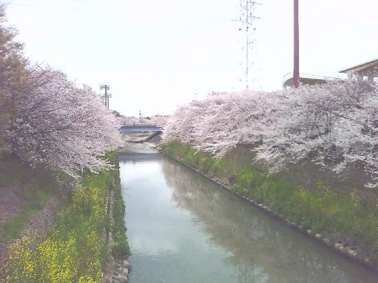 Nagoya, Japan: 山崎川沿い