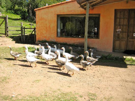 Posada Las Perdices: Feathered friends