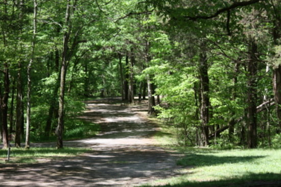 Chapel Hill, TN: Road in the Camp Ground