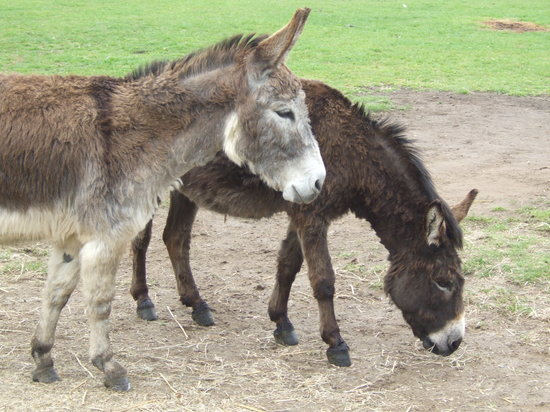 The Isle of Wight Donkey Sanctuary