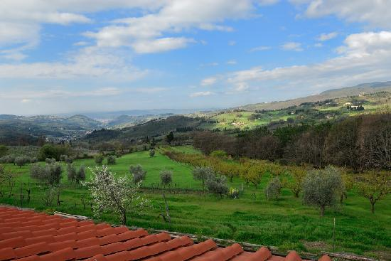 Farmhouse Olmo B & B: The view