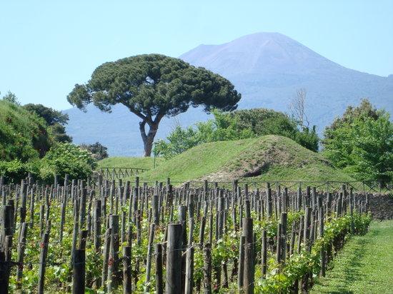 UNA Hotel Napoli : Mount Vesuvius