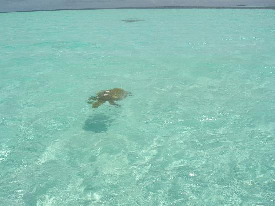 Fun Island Resort : laguna fun island