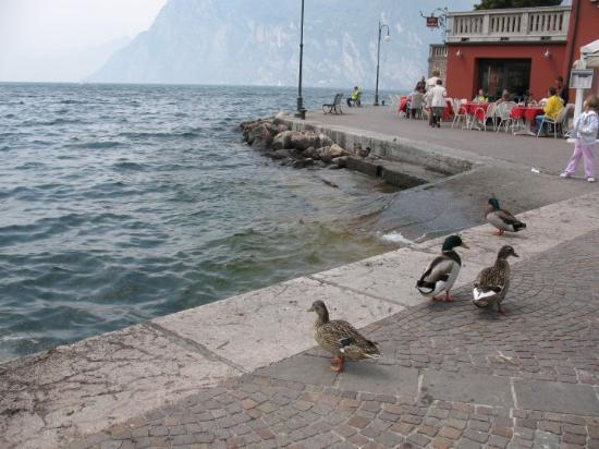 Zdjęcie Riva Del Garda
