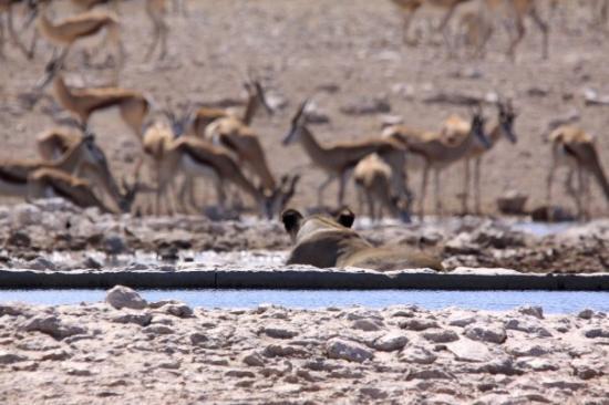 Etosha National Park รูปภาพ