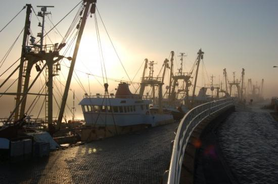 A foggy morning in Den Helder