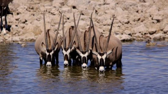 Etosha National Park Bild