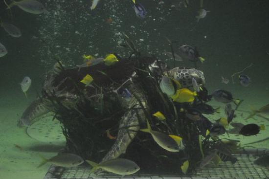 ปลาโบราณ หน้าตาน่ารักเชียว มองกล้องให้ด้วย - Picture of Toba Aquarium, Toba -...
