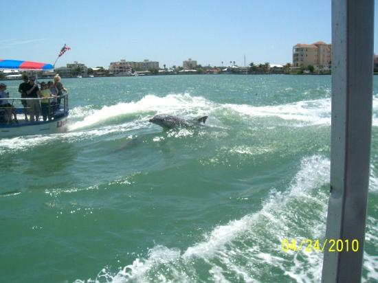Clearwater, FL: apparently the dolpins are attracted to the boats wakes cause it gives them a free ride