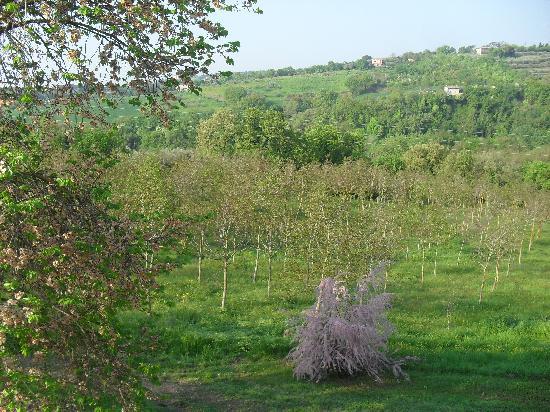 Agriturismo San Michele Arcangelo: ah che panorama!