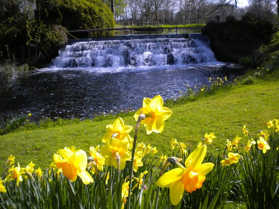 Henlow, UK: weir and daffodils
