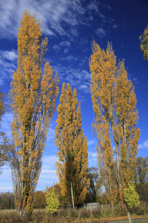 Twizel, Nuova Zelanda: Autumn at Omahau Downs