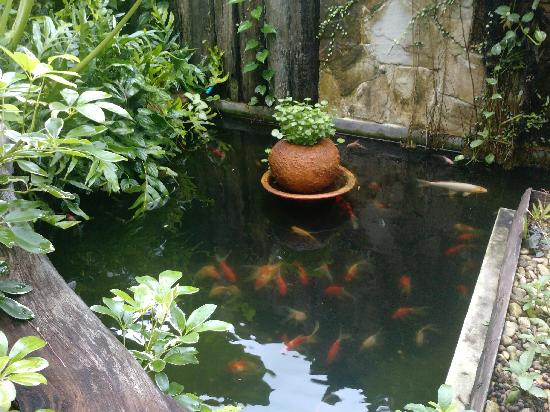 Remark Cottages : the fish
