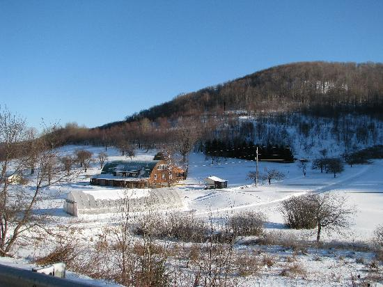 Frosty Hollow Bed & Breakfast: View from the road