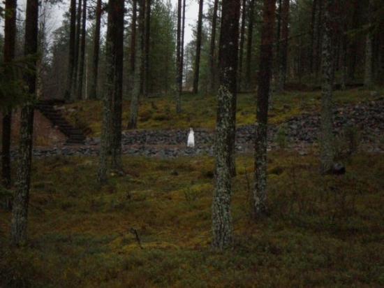 Rovaniemi, Finlandia: Sigue al conejo ártico