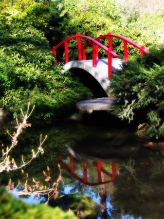 Kubota Garden: Reflection