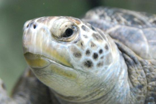 Monterey, CA: Aquarium
