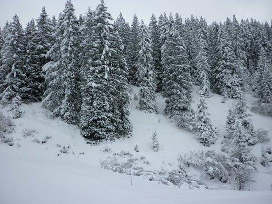 Massif du Mont d'Arbois : Tout blanc