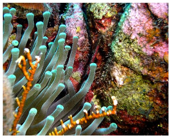 Grand Cayman : Coral shots near Lighthouse Point