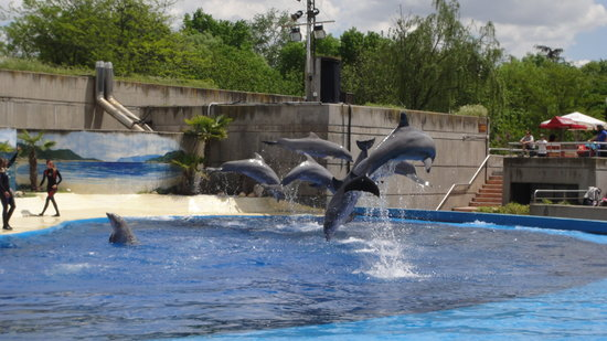 Zoo Aquarium de Madrid : Dolphin Show at the Madrid Zoo