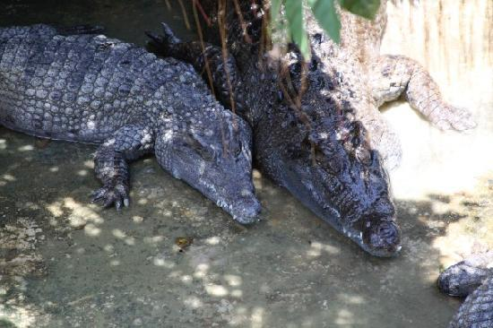 Palawan Island, Philippines: crocodile farm, the couple