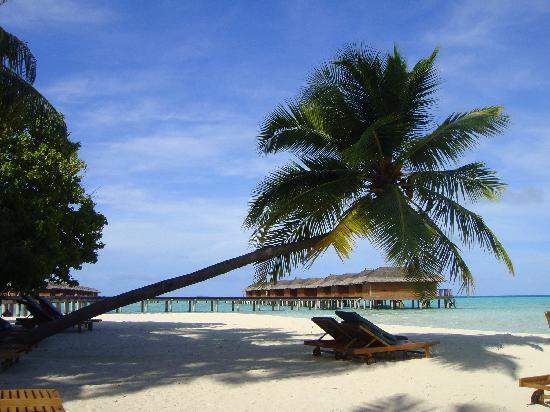 Hotel Medhufushi: plage