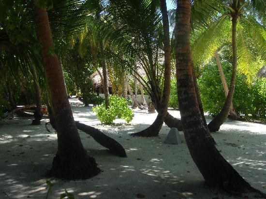 Hotel Medhufushi: ile