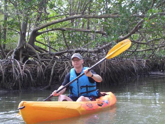 North Miami Beach, FL: kayaking through the mangroves