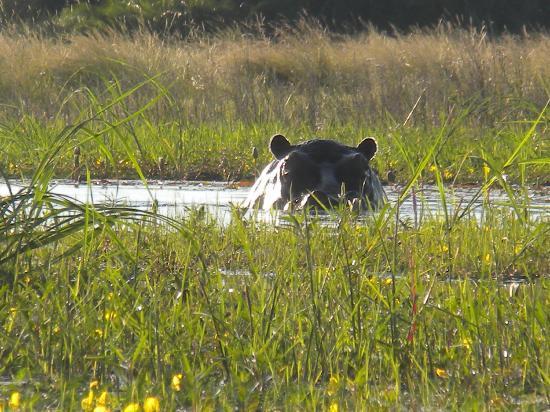 Tubu Tree Camp: Hippo pool