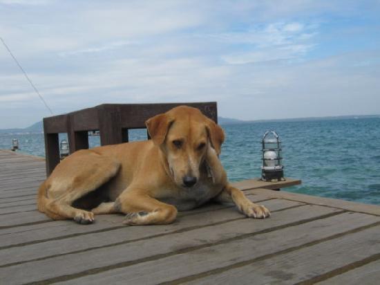 Baan Puu Paan: Pepsi relaxing by the sea