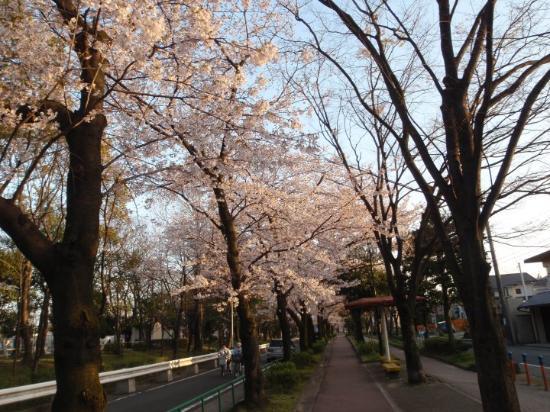 Bilde fra Nagoya