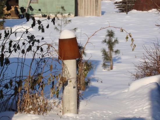 Krasnoyarsk, Russland: everyfingl has died till the summer...