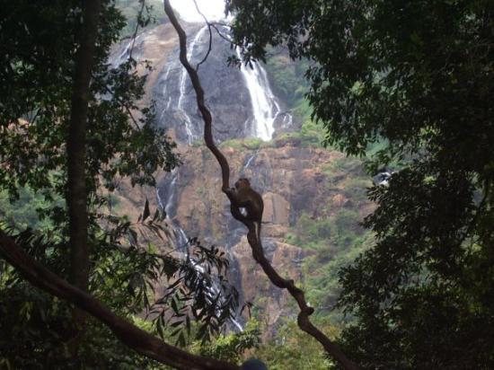 Καλανγκούτε, Ινδία: tutshagar watrefall