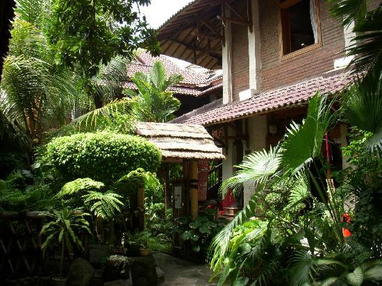Wisma Ary's: hotel covered in fresh greenery