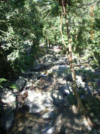 Yunxian Park : 木漏れ日のトレッキングコース