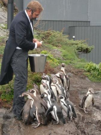 Alesund, Noorwegen: Atlanterhavsparken - Ålesund Akvarium