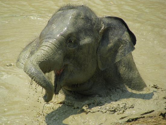 Boon Lott's Elephant Sanctuary : Star playing in the water