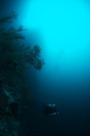 Malapascua Island, Philippines: Big Walls - Big Fish!
