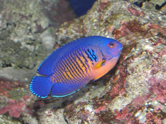 Mountain Views Guest House: Besök stora akvariet i CapeTown