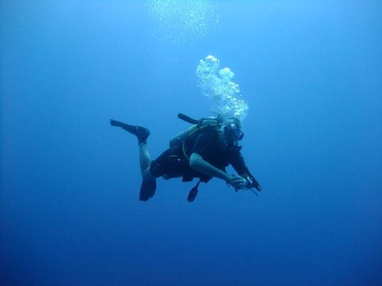 Camel Dive Club & Hotel: red sea diving