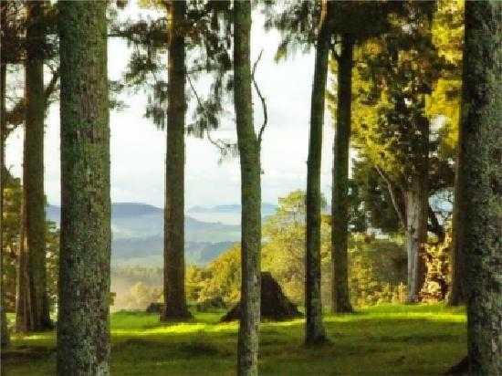 Arches Retreat - Ridgeland Farm Whangarei: Discover 100 acres