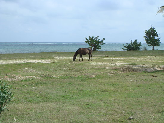 Guardalavaca, Cuba: Nice countryside for a bicycle ride